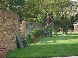 PLANTING_BUXUS