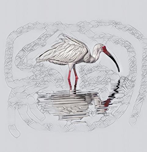 Single Ibis Mini Metal Print by Kathryn Seguin Photography