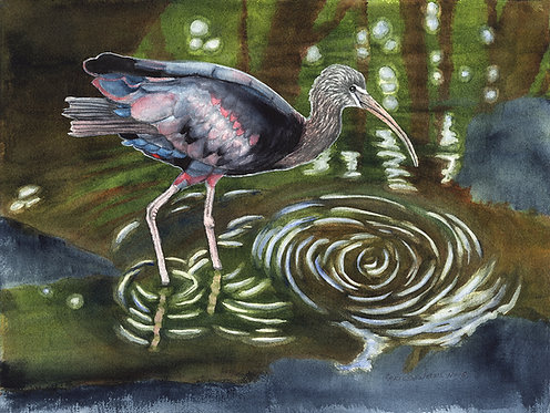 """Glossy Ibis"" Original Watercolor painting by Christine Reichow"