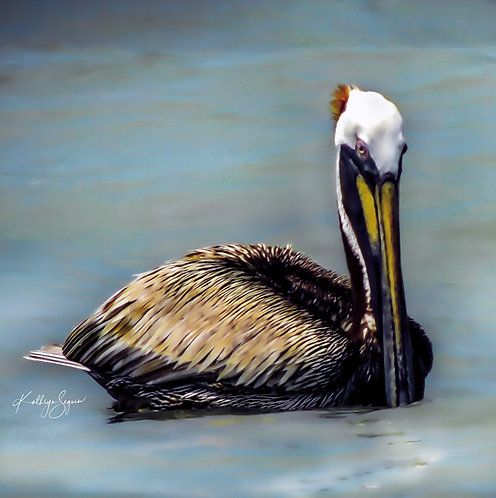 Mr Pelican Blue by Kathryn Seguin Photography Square Foot Show