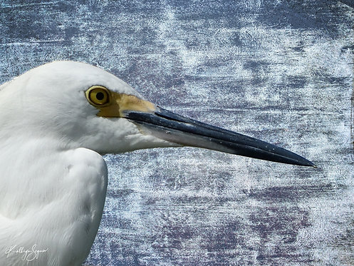 Heron in Profile by Kathryn Seguin Photography