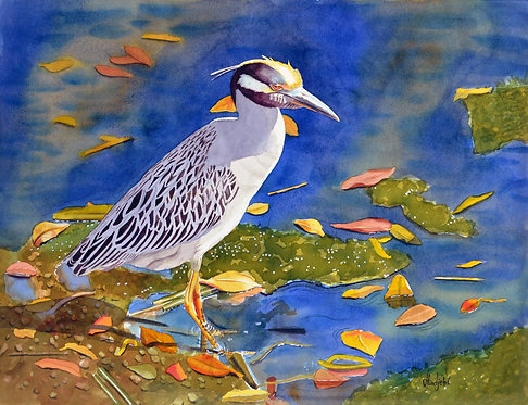 Shah Hadjebi, Contemplating Night Heron at Ding Darling