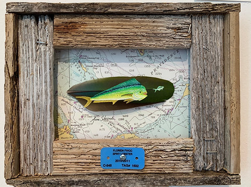"""""""Bahamas Mahi"""" Original Feather painting by Anne Schroeder"""