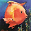 Thumbnail: CUSTOM-MADE Family and Friends Painted as a Fish by Joan Roberts - Great Gifts