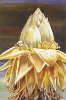goldenlotus.jpg