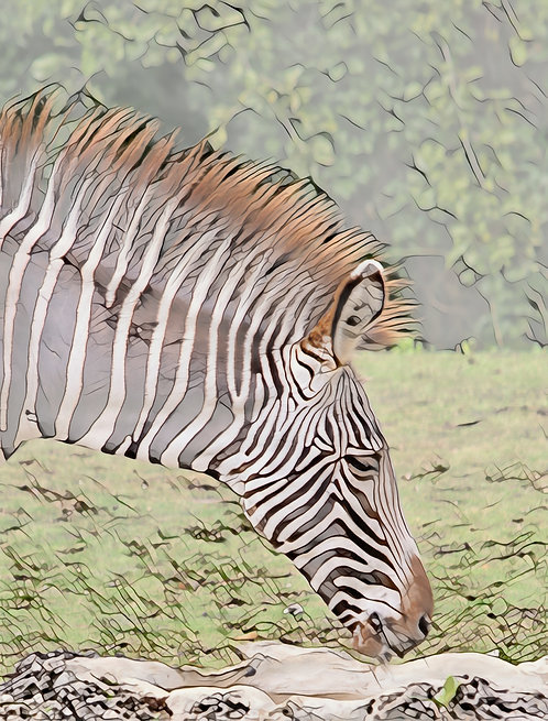 Zebra Head Right Mini Metal Print by Kathryn Seguin Photography