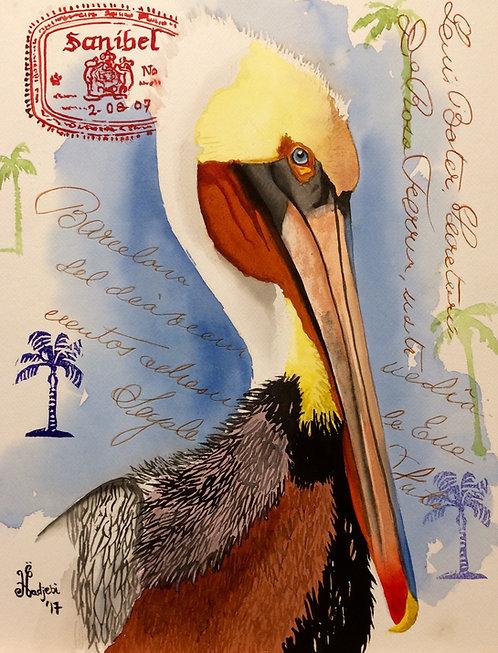 Sanibel Pelican by Shah Hadjebi