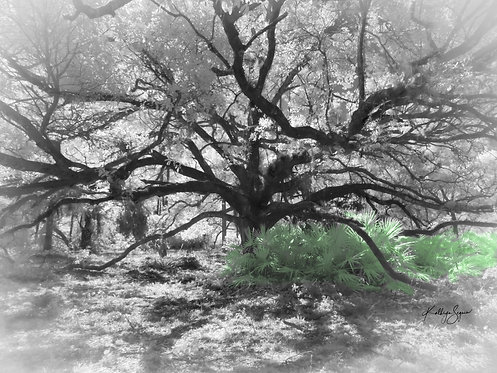 """""""Tree of Life"""" Infrared photography on acrylic glass by Kathryn Seguin"""