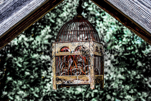 Bird Cage???? By Kathryn Seguin Photography