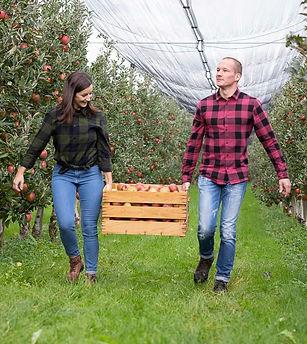 Holzkiste mit Äpfeln