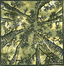 Looking Up-Linocut