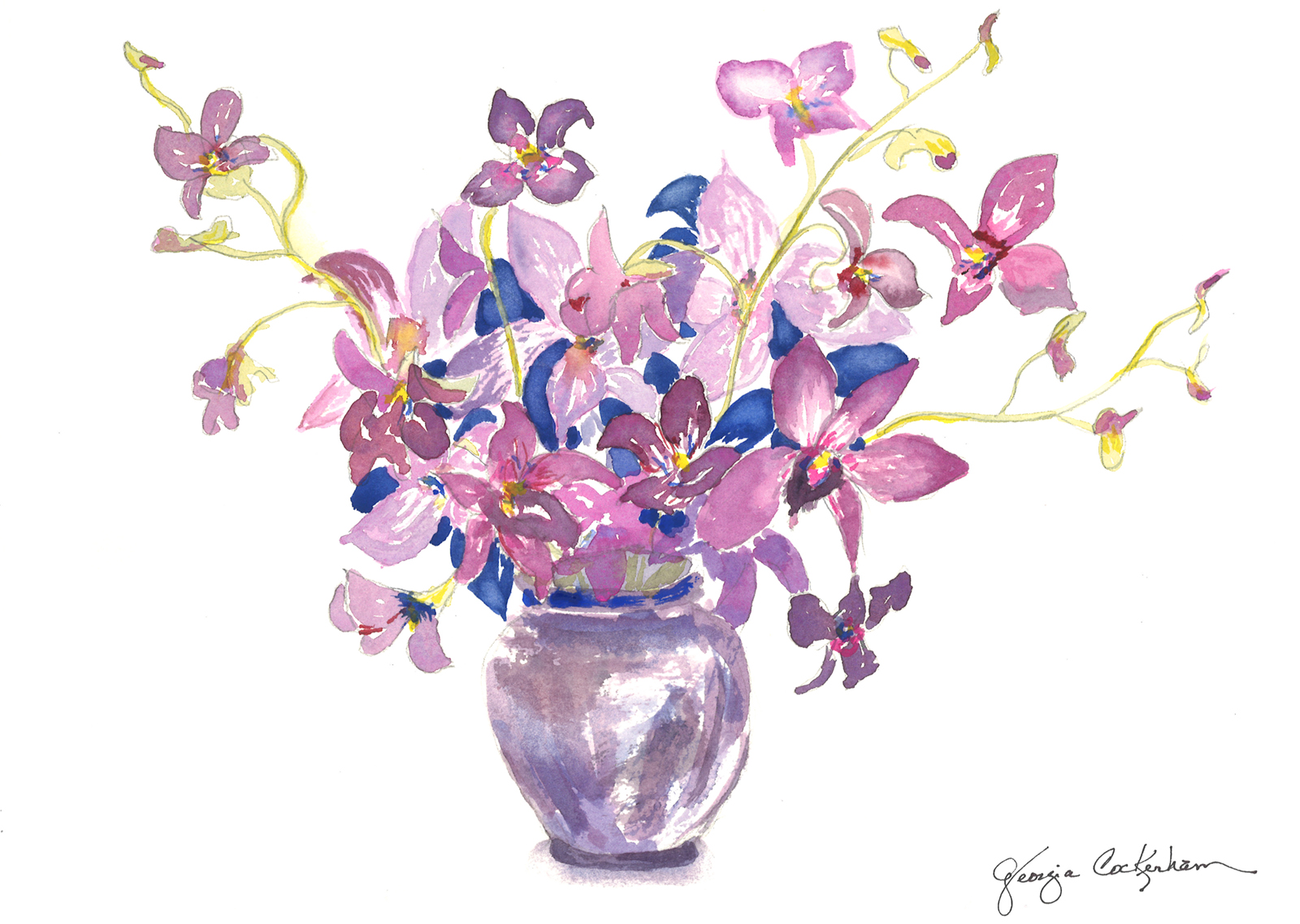 orchids s