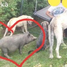 Janinka a Pepík - domov nalezen