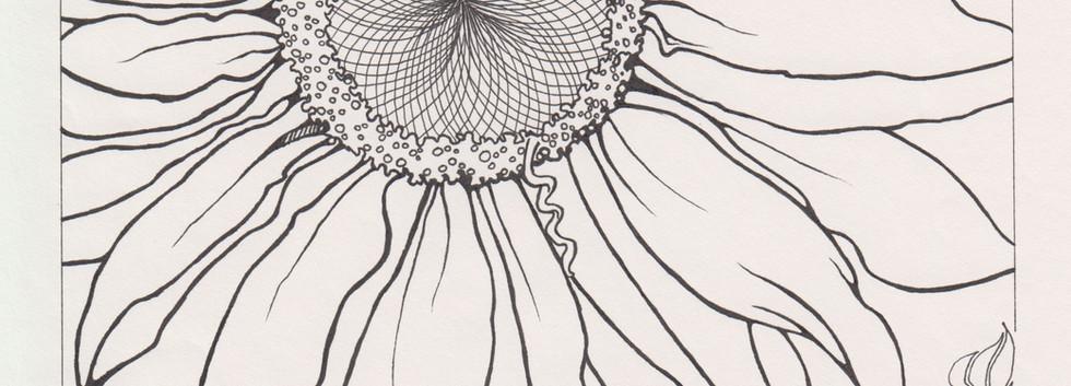 Coloring Sunflower.jpg