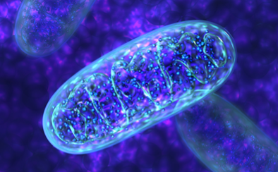 Long-haulers Syndrome – Mitochondrial Support