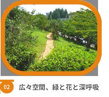 竹山団地 敷地内の緑