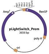 SGG_PROM_RenSP_web_big.jpg