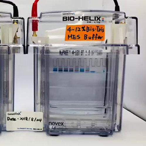 常用蛋白質標記 (10-180 kD)