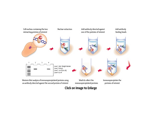 細胞核複合物 Co-IP 試劑組