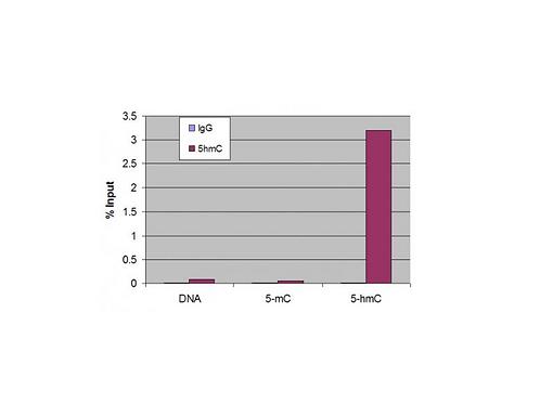 5-Hydroxymethylcytosine (5-hmC) antibody (pAb)