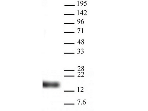 Histone H3K9me3 antibody (pAb)
