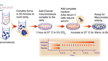 Transfection 新選擇 ─ 直接送入蛋白,讓表現 (expression) 更快速、更直接