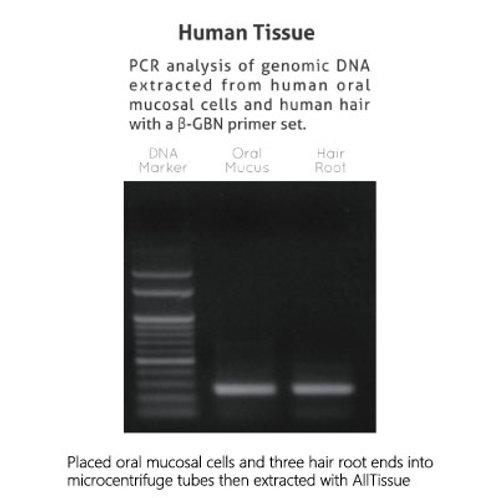 SMB AllTissue Extraction/PCR Kits