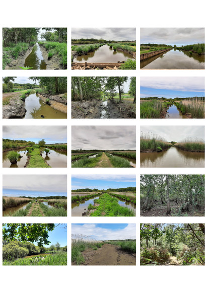Photos des marécages, futur lac tampon
