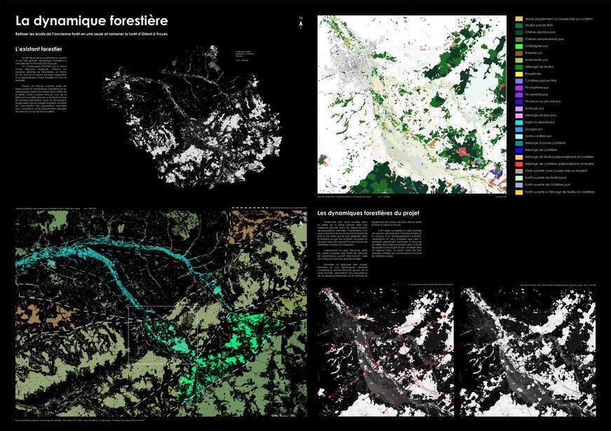 Dynamique forestière