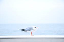Black Sea Bird