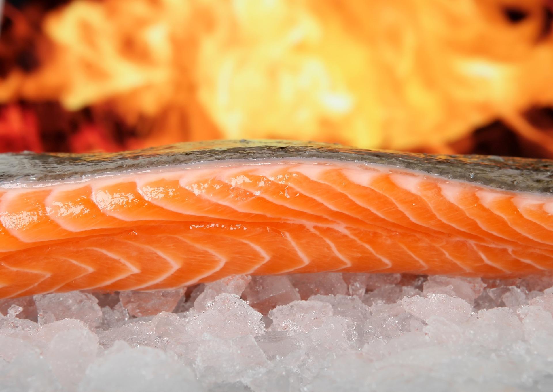 salmon-1238662_1920