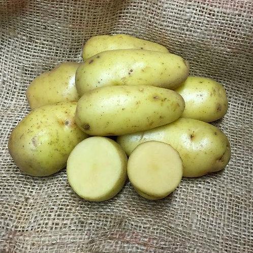 "KRAV-odlad potatis ""Kifli"""