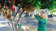Palo Alto High School's Popular Wish Tree Project