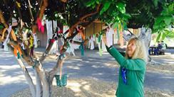 Palo Alto High School's Popular Wish Tree Project