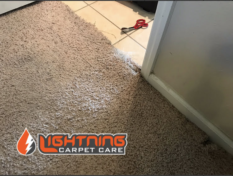Carpet Torn From Pets