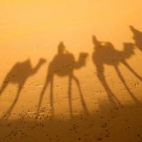 camel-2482792_1920.jpg