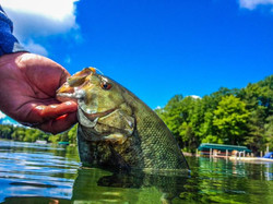 What an amazing way to start the afternoon, sight fishing big Smallies on beds!! I'm in heaven _)