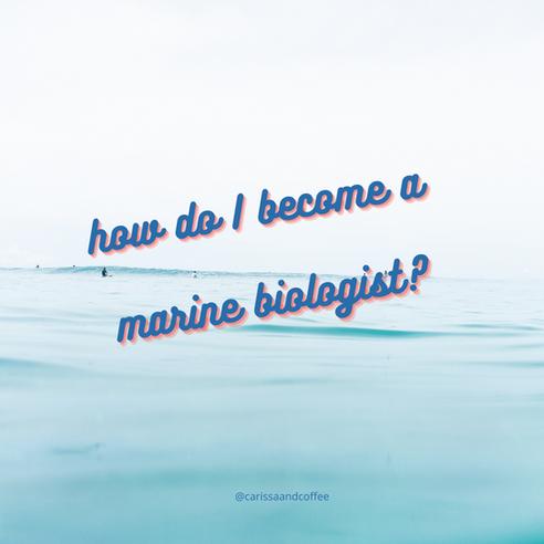 Tips + FAQs for Aspiring Marine Biologists