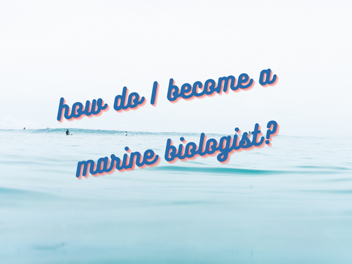 Tips + FAQs for Aspiring Marine Biologists