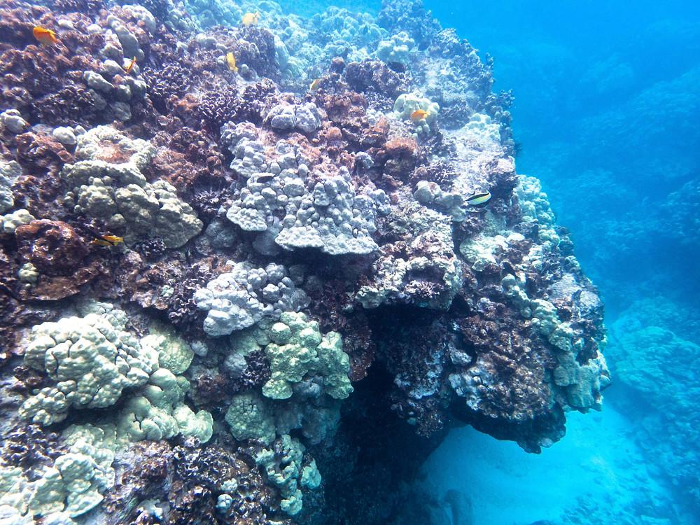 coral reef ocean conservation marine biology diving hawaii