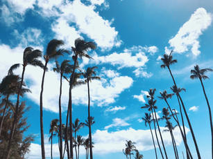 Kona Winds and Kailua Palms