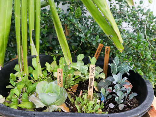 Beginner's Guide to Composting