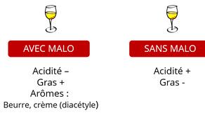 Tout savoir sur la fermentation malolactique, communément appelée « FML » ou « Malo »