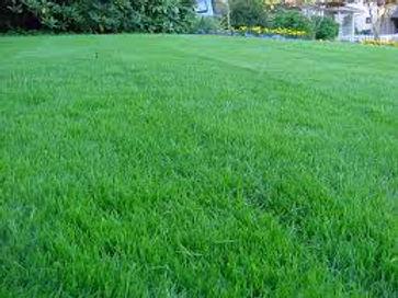 lawn grass mixture.jpeg