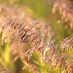 premium pasture mix.jpg