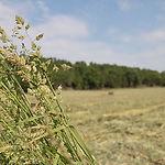 northern pasture mixture.jpg