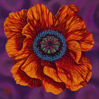 LMFA Flower Art, POPPY, Giclee Print: LIMITED Edition, By Logan Madsen