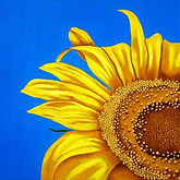 SUNFLOWER, by Artist Logan Madsen, View All His Flowers Art SHOP LMFA for GICLEE/PHOTO Prints