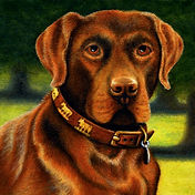 Art Commissions/Gifts, CHOCOLATE Labrador, by Logan, SHOP LMFA for Paintings, GICLEE and PHOTO Prints