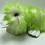 Thumbnail: Big Green Duckie
